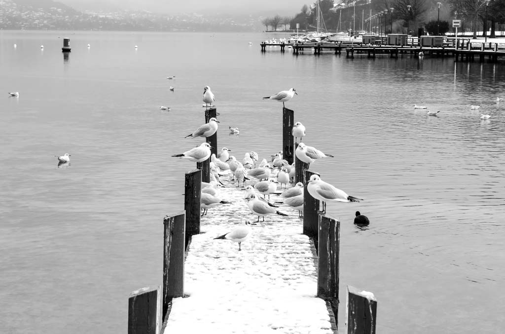 Seagulls escaping the snow on a jetty overlooking Lake Annecy